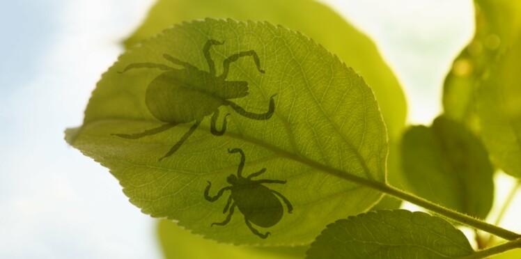 Maladie de Lyme : un danger gravement sous-estimé