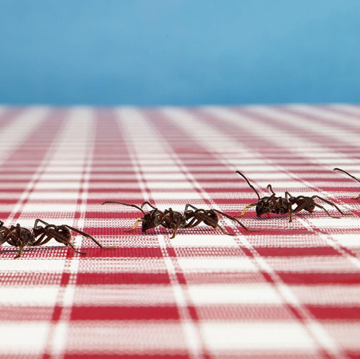 Eloigner Les Fourmis Au Jardin 5 astuces naturelles pour en finir avec les fourmis : femme