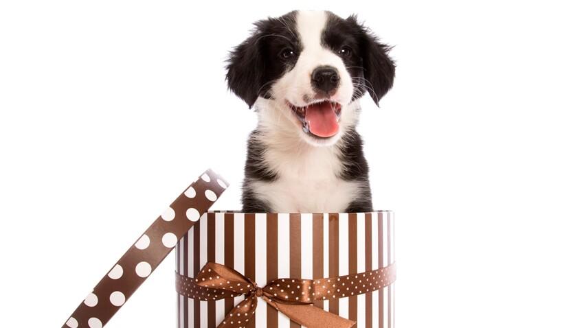 Offrir un animal à ses parents, une bonne idée ?