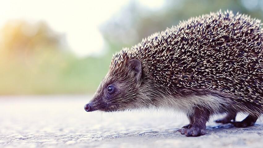 Aidez à protéger les animaux des accidents de la route !