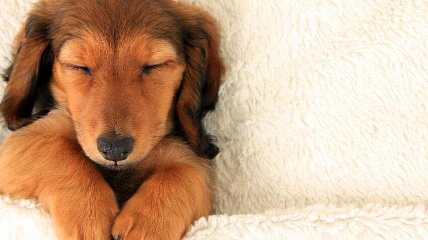 Pourquoi il faut laisser les chiens dormir