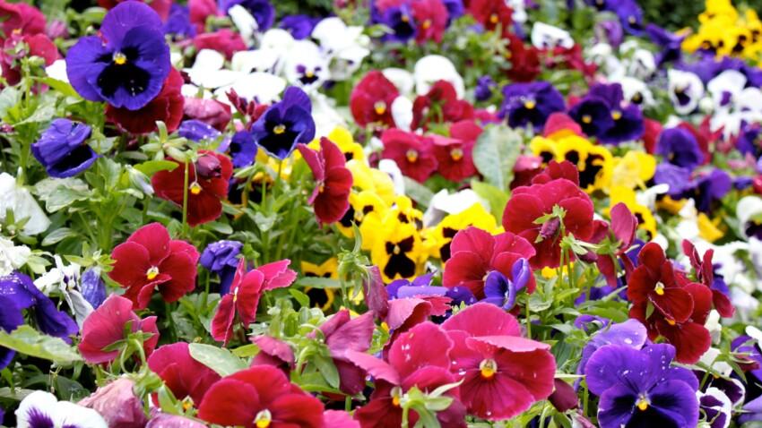 Quelles fleurs planter pour avoir un beau jardin cet hiver ?