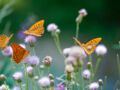 Quelles plantes pour attirer les papillons dans son jardin ?