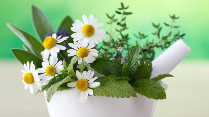 5 plantes médicinales à faire pousser dans son jardin
