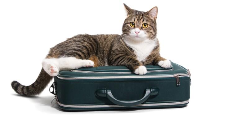 Un nouveau service pour garder ou faire garder un chat