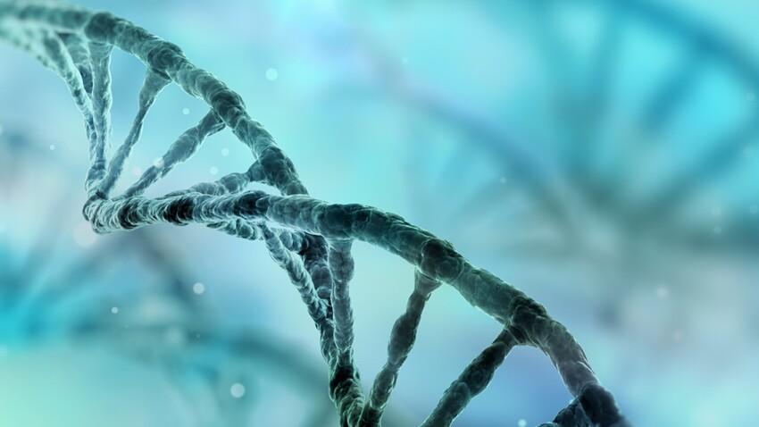 Une nouvelle protéine du vieillissement identifiée