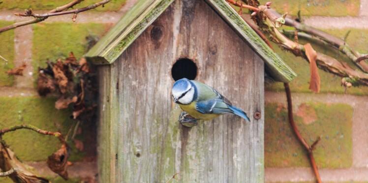 Comment fabriquer un abri hivernal pour les petits animaux ?