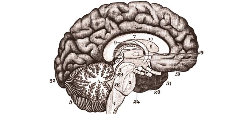Le cerveau humain s'invite au musée