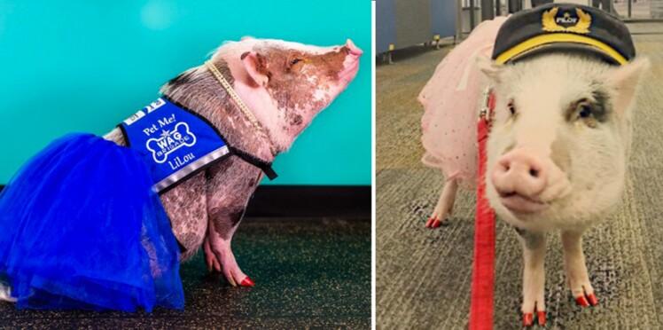 Découvrez Lilou, le petit cochon qui déstresse les voyageurs !