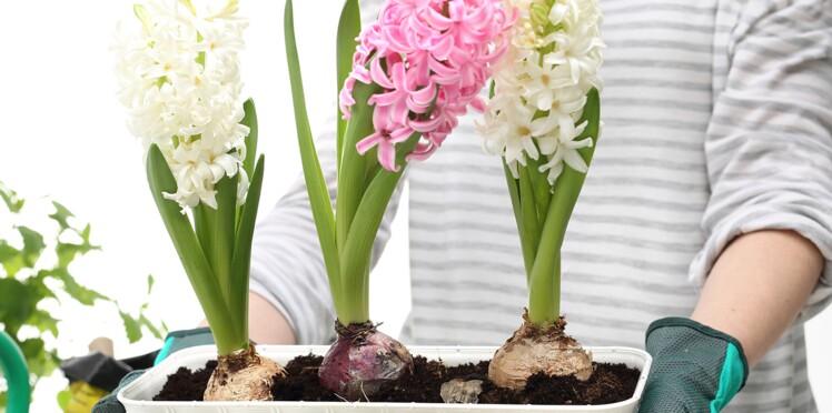 Planter ses bulbes en hiver pour un printemps fleuri