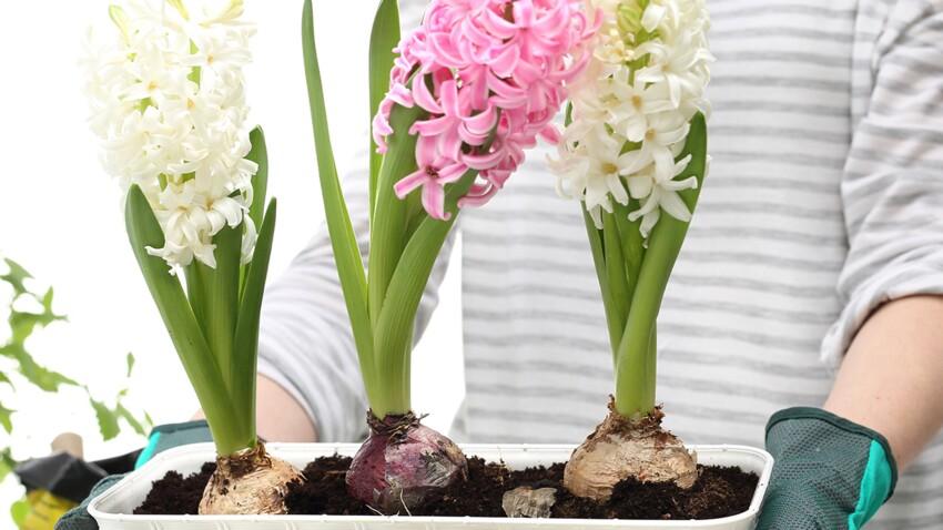 Planter ses bulbes en automne pour un printemps fleuri