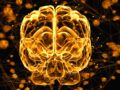 Et maintenant des ultrasons contre Alzheimer ?