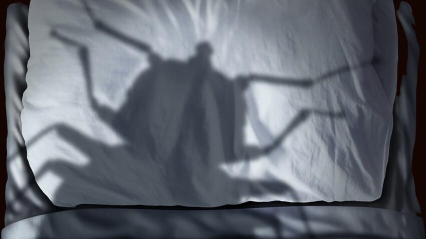 Les punaises de lit, c'est l'enfer !