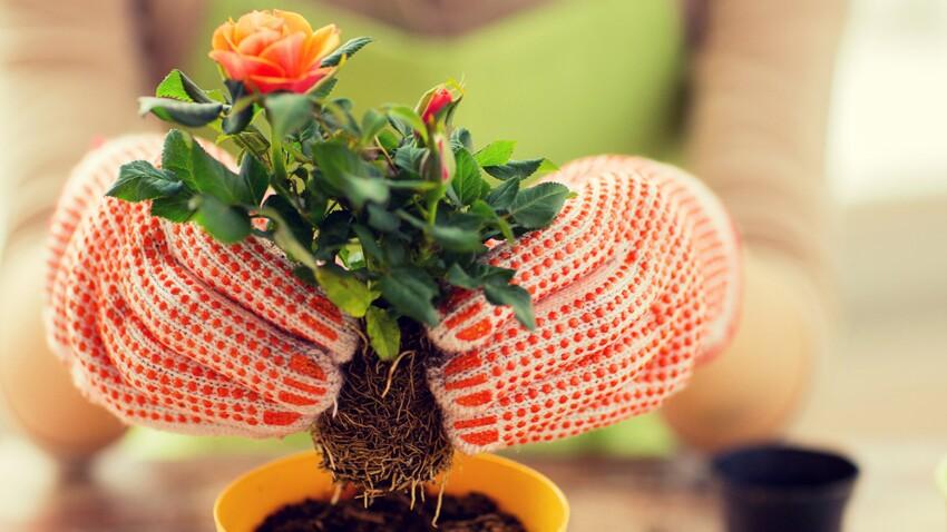 Une clinique en ligne pour guérir vos plantes !