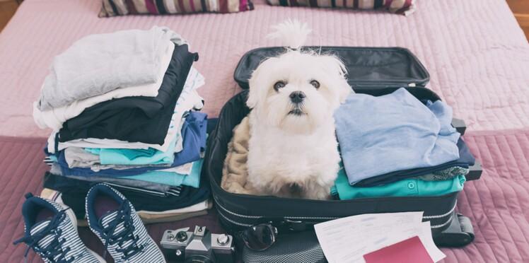 Comment voyager avec mon animal ?