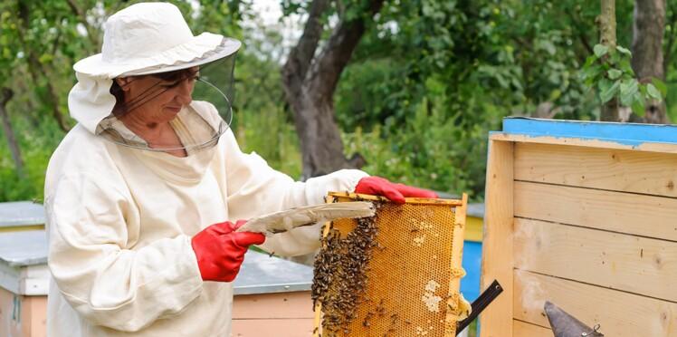 Une ruche sur votre balcon ? C'est possible !