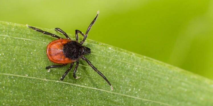 5 vérités sur la maladie de Lyme