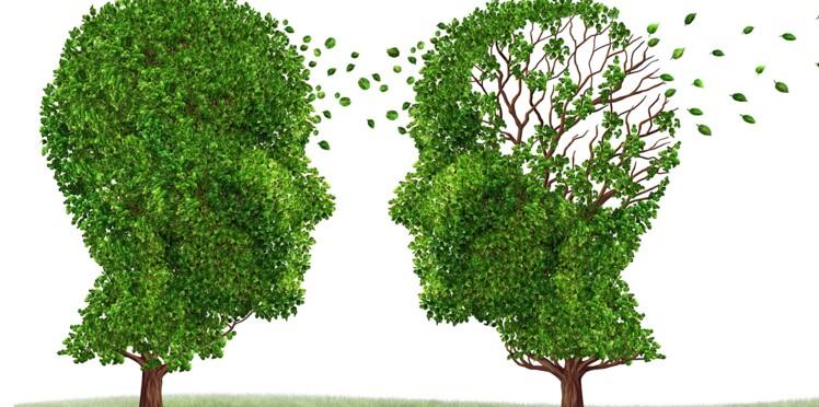 Notre cerveau vieillirait-il dès l'âge de 20 ans ?