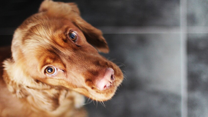 Abandon, maltraitance animale : devenez lanceur d'alerte !