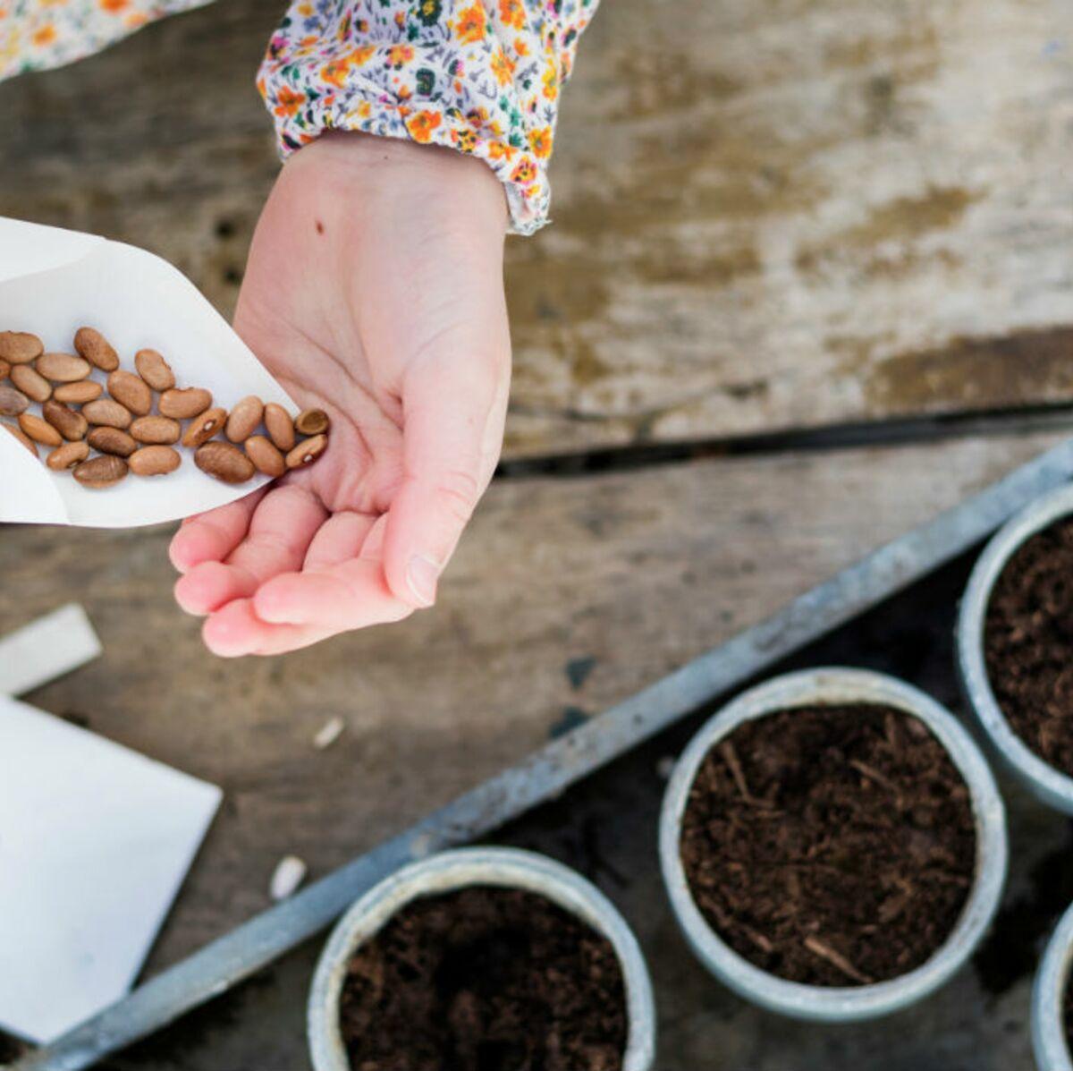 Comment Planter Les Graines De Persil jardin : 4 bons plans pour dénicher des graines gratuites