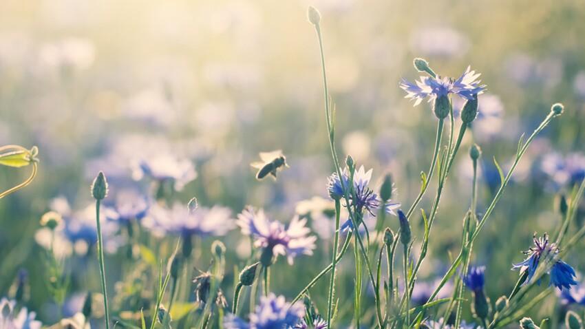 Comment attirer les abeilles au jardin ou sur son balcon ?