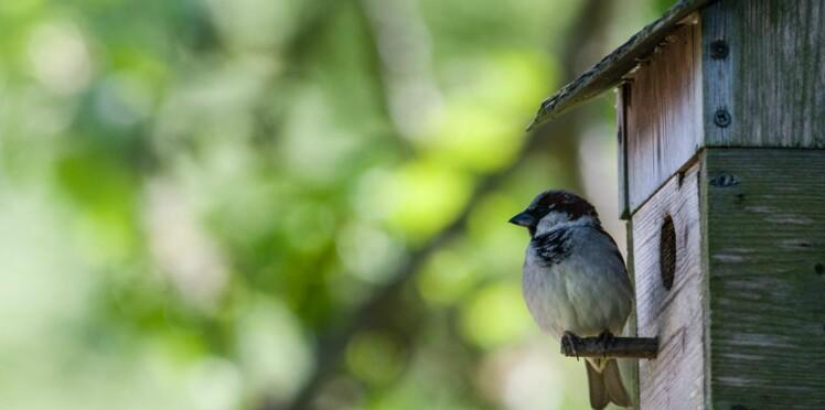 Comment attirer les oiseaux dans son jardin ?