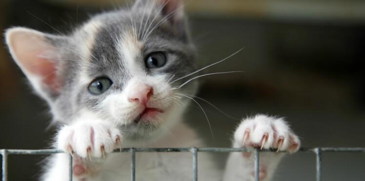 10 choses à faire quand on trouve un animal abandonné