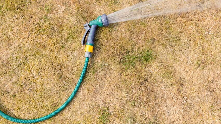 Jardin : 5 astuces pour réparer les dégâts de l'été