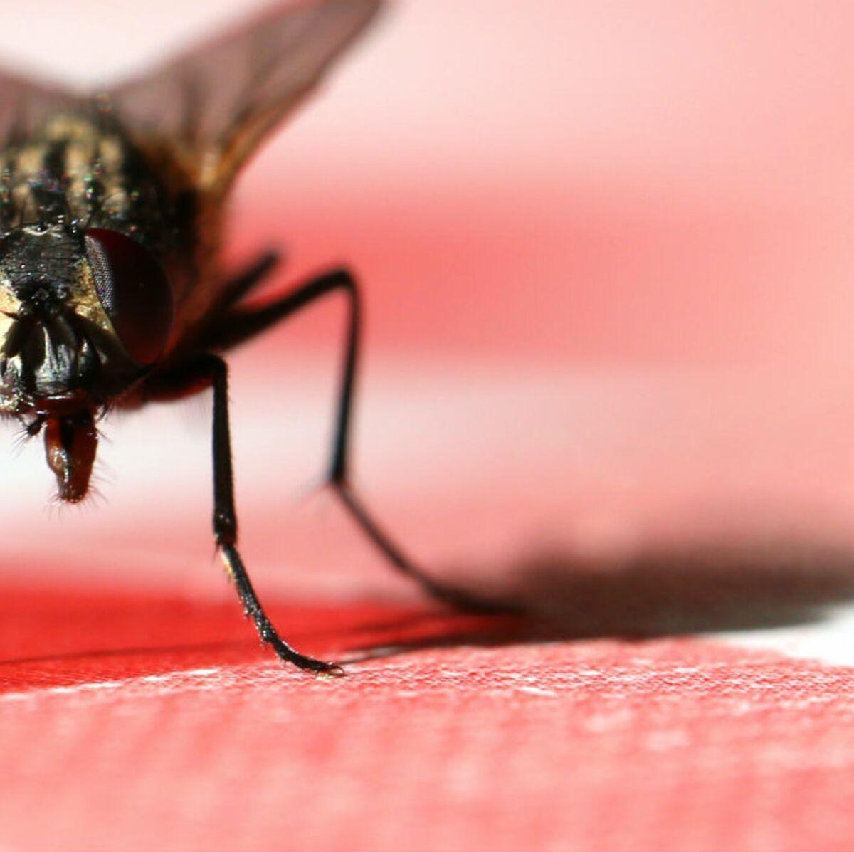 Bicarbonate De Soude Contre Les Pucerons 8 astuces naturelles pour se débarrasser des mouches dans la