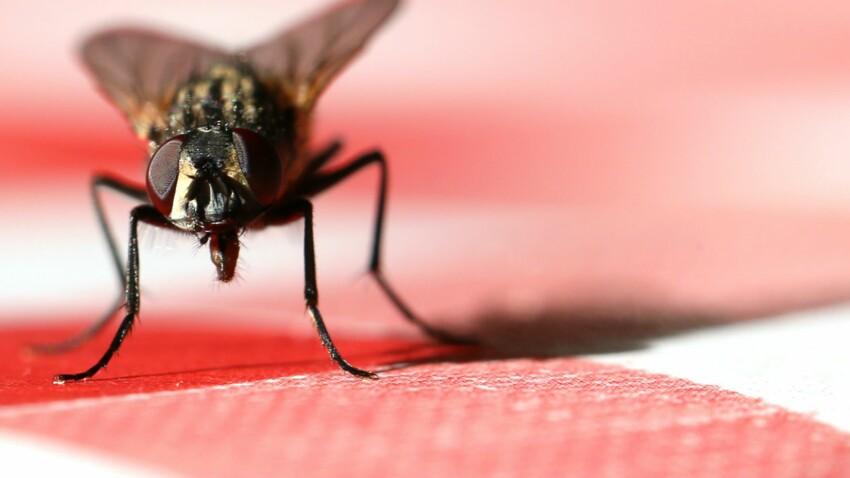 8 astuces naturelles pour se débarrasser des mouches dans la maison