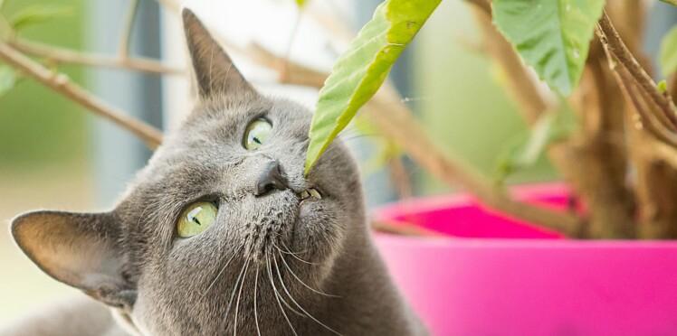 Quelles plantes privilégier quand on a un chat ?