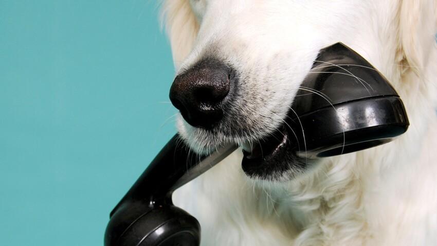 Alerte au chat ou chien perdu : attention aux arnaques !