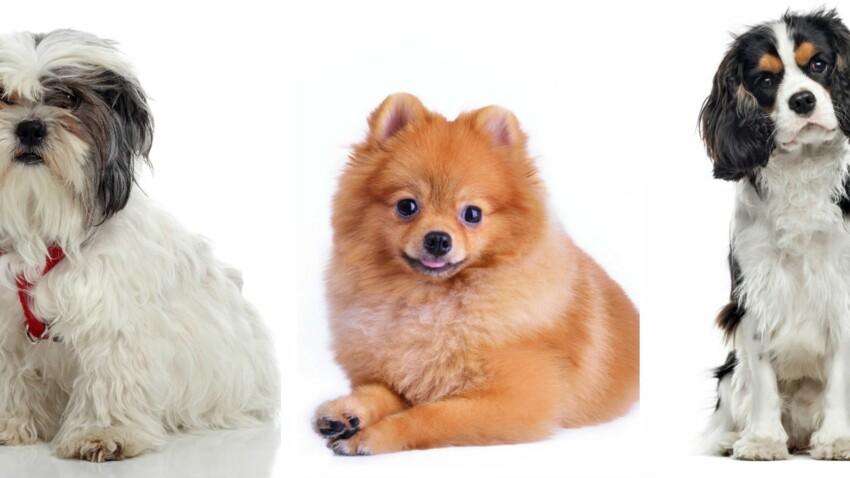 Le top 5 des races de chiens amis des seniors