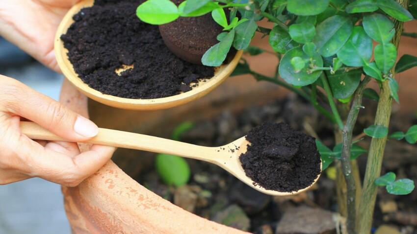 5 fertilisants naturels pour le jardin