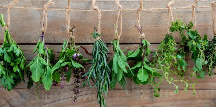 5 astuces pour conserver ses herbes aromatiques