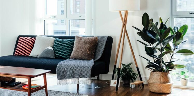 5 conseils pour bien entretenir ses plantes d'intérieur en hiver