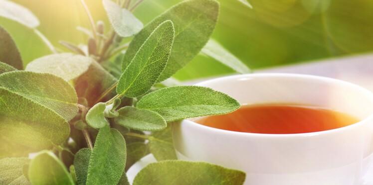 5 bonnes raisons de boire de la tisane de sauge