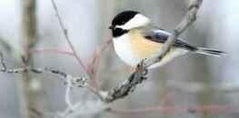 Ce week-end, participez au grand recensement des oiseaux !