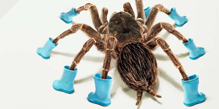 Du venin d'araignée contre l'impuissance ?