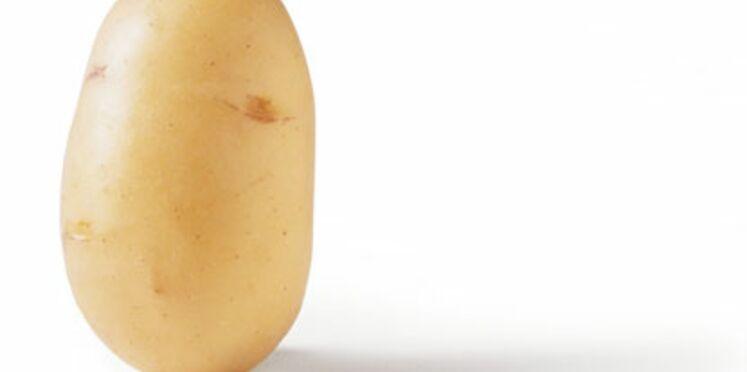OGM : la patate de la discorde