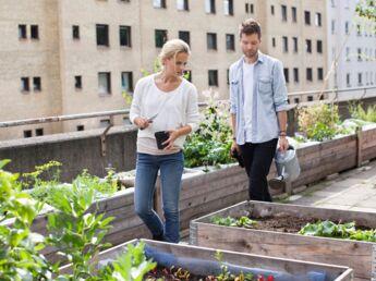 Ecole, toits d'immeubles, entreprises: vive les potagers en ville !