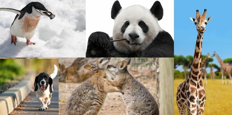 Mode de vie, amour, éducation: les drôles de pratiques des animaux