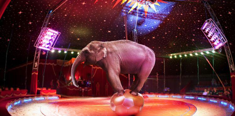 Faut-il interdire les animaux de cirques?
