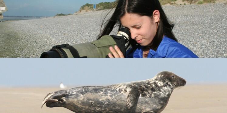 Cet été, elle protège les phoques de la baie de Somme