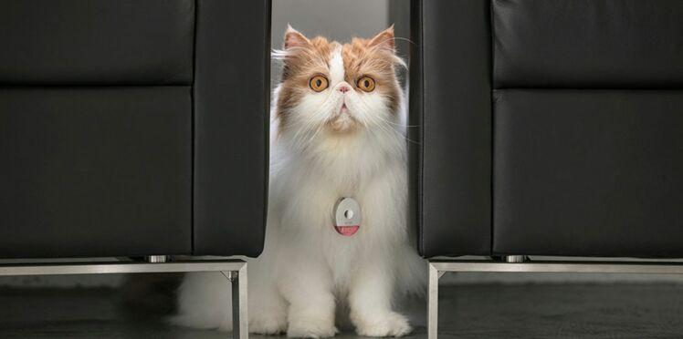 Déco, cuisine, sécurité...: chiens et chats, un vrai business!