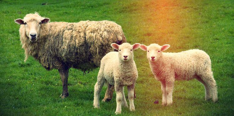 Elle a quitté son job parisien pour élever des moutons à la campagne