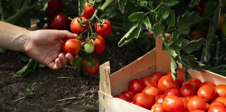 Et si nos tomates retrouvaient du goût?