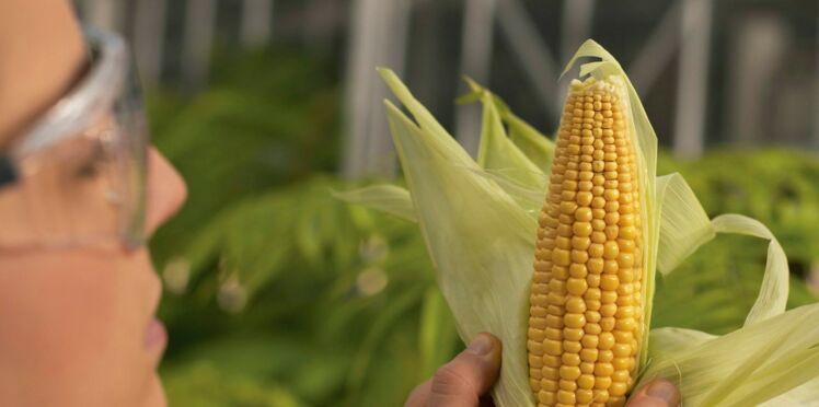 Une étiquette « sans OGM » sur les produits alimentaires