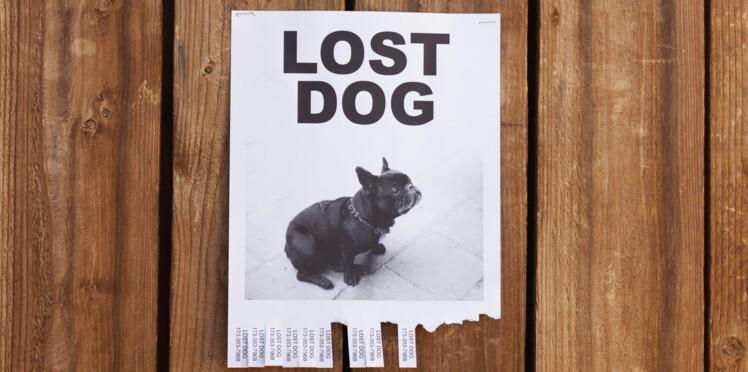 Grâce à Facebook, elle retrouve les animaux disparus