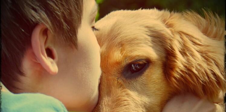 Ce chien a redonné le goût de vivre à un enfant handicapé